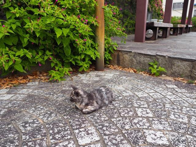 撮り貯まった猫の画像101枚目!