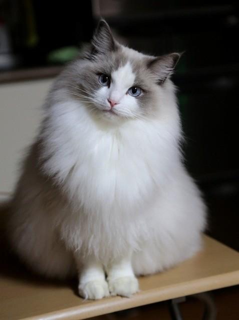 猫の画像41枚目!