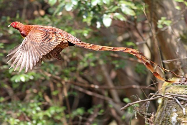 【愛鳥週間】県鳥の画像を貼ってくの画像16枚目!
