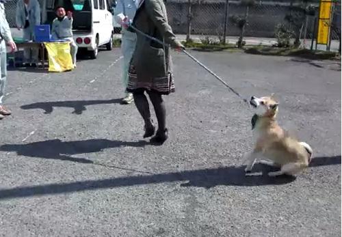 犬の画像5枚目!