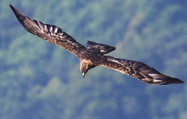 【愛鳥週間】県鳥の画像を貼ってくの画像54枚目!