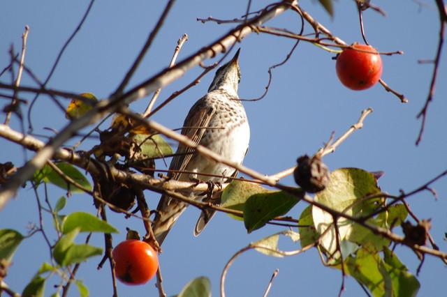 【愛鳥週間】県鳥の画像を貼ってくの画像57枚目!