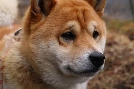 駄犬「ごすずん」の画像15枚目!