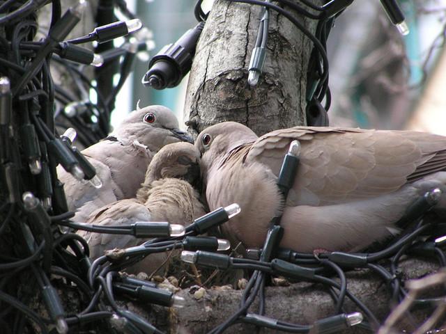 【愛鳥週間】県鳥の画像を貼ってくの画像32枚目!