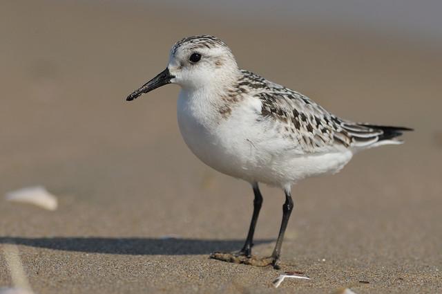 冬の鳥スレ<br />この季節に一度は見る鳥<br />スレ画はハクセキレイの画像7枚目!