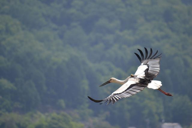 【愛鳥週間】県鳥の画像を貼ってくの画像82枚目!