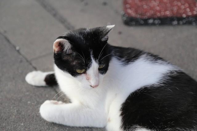 撮り貯まった猫の画像74枚目!
