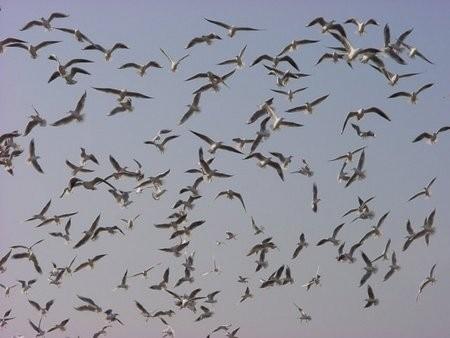 冬の鳥スレ<br />この季節に一度は見る鳥<br />スレ画はハクセキレイの画像9枚目!