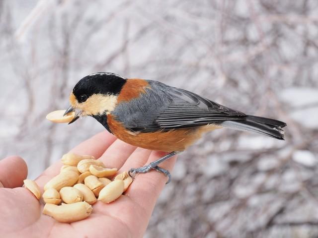 冬の鳥スレ<br />この季節に一度は見る鳥<br />スレ画はハクセキレイの画像25枚目!