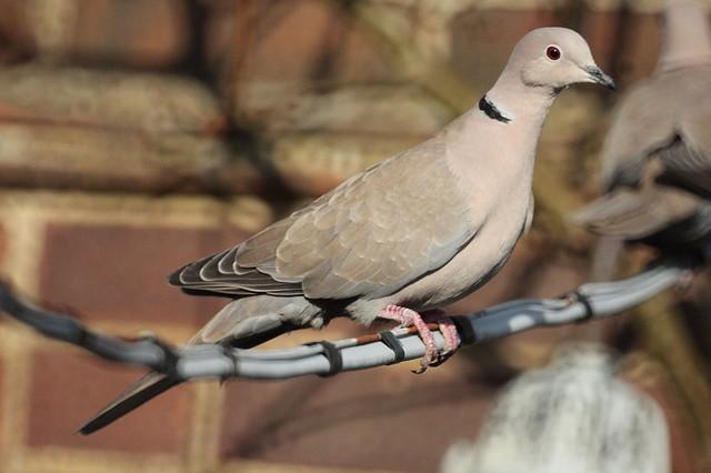 【愛鳥週間】県鳥の画像を貼ってくの画像31枚目!
