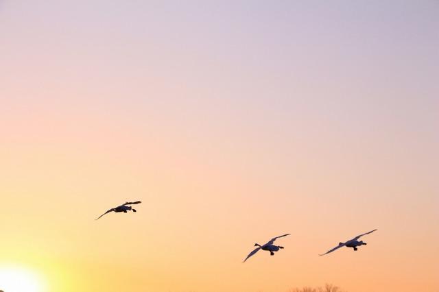 【愛鳥週間】県鳥の画像を貼ってくの画像7枚目!