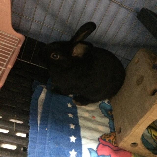 うちのウサギさんの写真うpしますの画像3枚目!