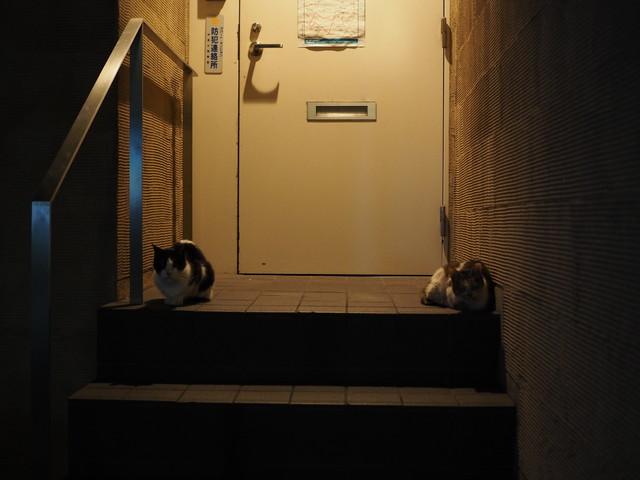 撮り貯まった猫の画像80枚目!