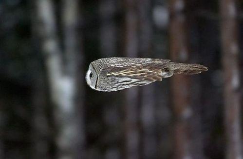 冬の鳥スレ<br />この季節に一度は見る鳥<br />スレ画はハクセキレイの画像15枚目!