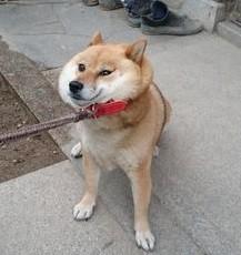 犬の画像1枚目!