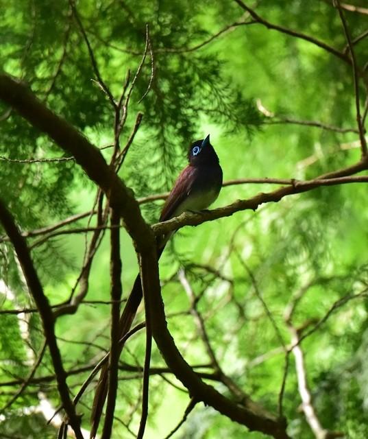【愛鳥週間】県鳥の画像を貼ってくの画像63枚目!