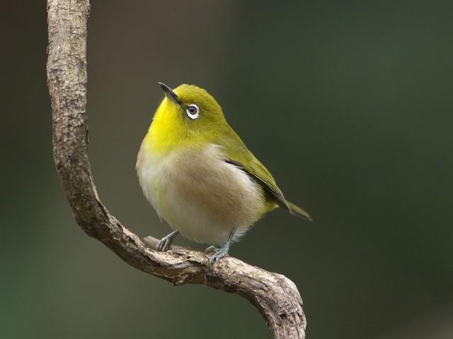 冬の鳥スレ<br />この季節に一度は見る鳥<br />スレ画はハクセキレイの画像19枚目!
