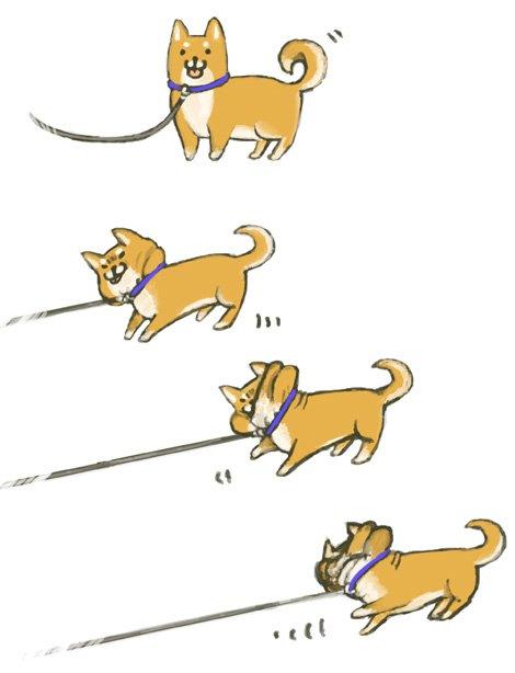 犬の画像2枚目!