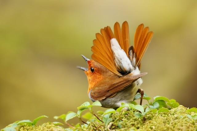 【愛鳥週間】県鳥の画像を貼ってくの画像86枚目!
