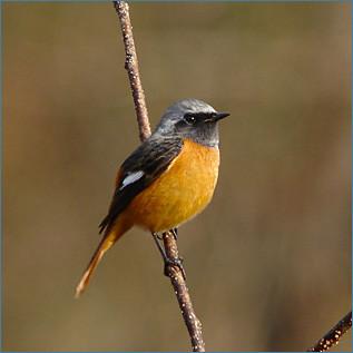 冬の鳥スレ<br />この季節に一度は見る鳥<br />スレ画はハクセキレイの画像3枚目!