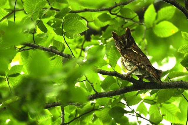 【愛鳥週間】県鳥の画像を貼ってくの画像65枚目!