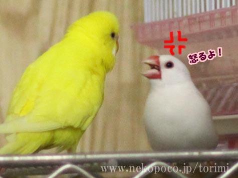 文鳥の文ちゃんスレの画像26枚目!
