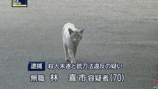 猫の画像でトーナメント表作ったの画像2枚目!