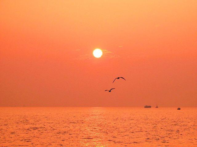 【愛鳥週間】県鳥の画像を貼ってくの画像44枚目!