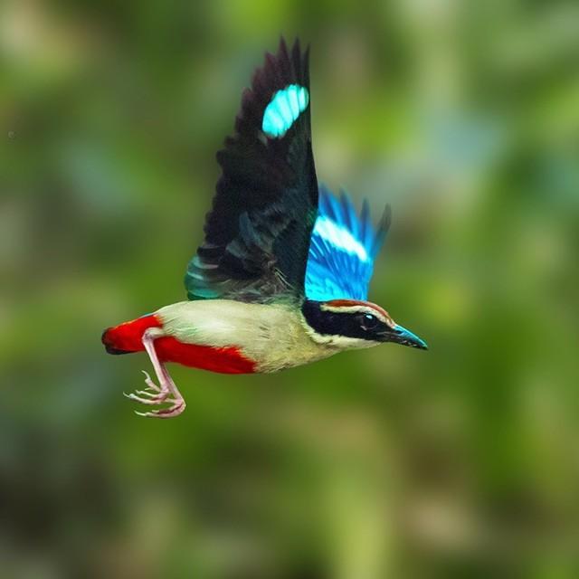 【愛鳥週間】県鳥の画像を貼ってくの画像106枚目!