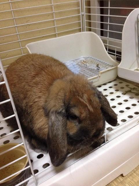 うちのウサギさんの写真うpしますの画像12枚目!