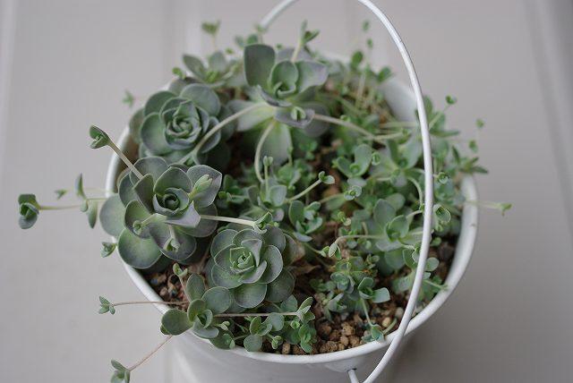 キモい植物の画像24枚目!