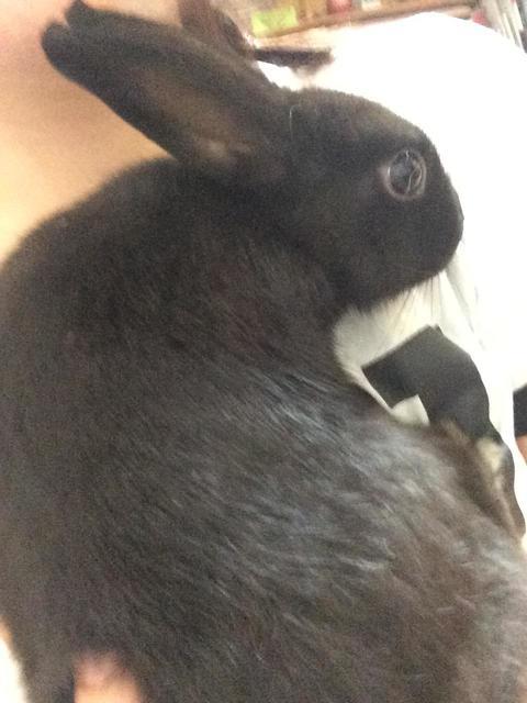 うちのウサギさんの写真うpしますの画像6枚目!