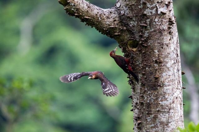 【愛鳥週間】県鳥の画像を貼ってくの画像118枚目!
