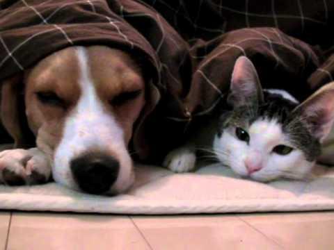 ネコとイヌはどっちが可愛いのかの画像17枚目!