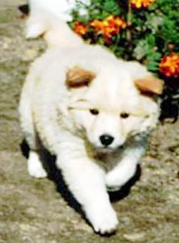 犬スレの画像12枚目!