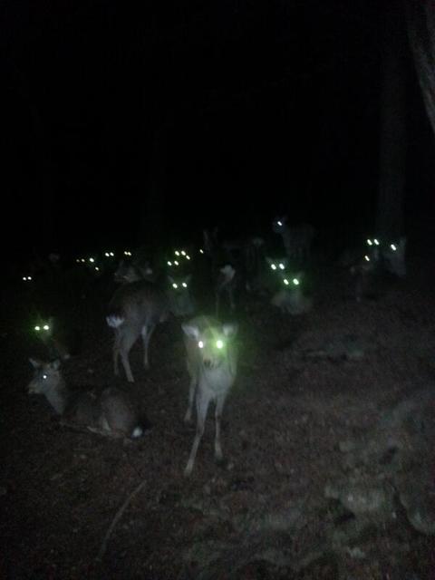 鹿が鎖噛んでる画像集めたの画像23枚目!