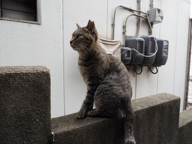 撮り貯まった猫の画像87枚目!