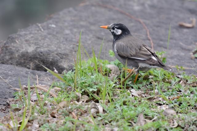 冬の鳥スレ<br />この季節に一度は見る鳥<br />スレ画はハクセキレイの画像18枚目!