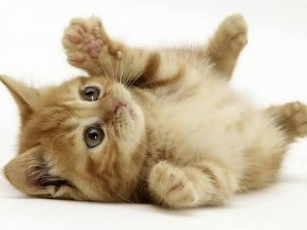 猫の画像1枚目!