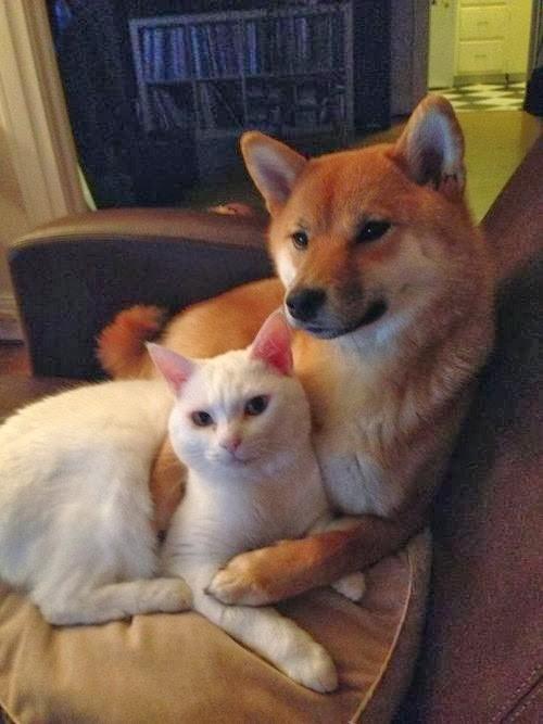 ネコとイヌはどっちが可愛いのかの画像12枚目!