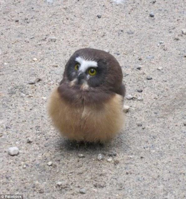 迷子の子フクロウを無事発見への画像2枚目!