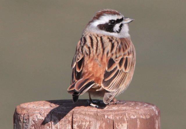 【愛鳥週間】県鳥の画像を貼ってくの画像36枚目!