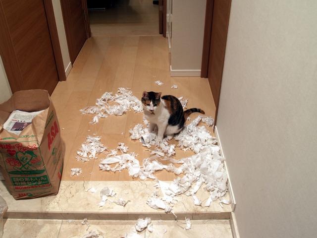 犬、猫の画像22枚目!