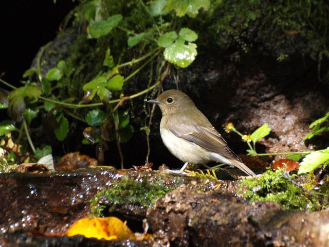【愛鳥週間】県鳥の画像を貼ってくの画像29枚目!