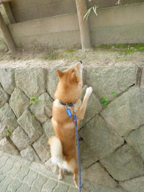 駄犬「ごすずん」の画像16枚目!