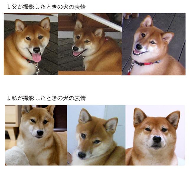 駄犬「ごすずん」の画像38枚目!
