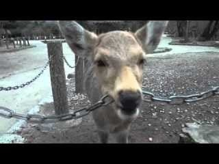鹿が鎖噛んでる画像集めたの画像16枚目!