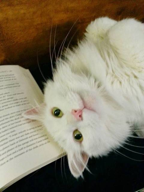 猫の画像51枚目!