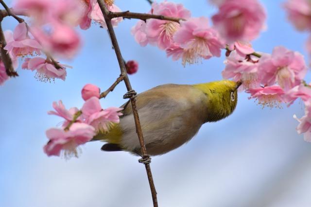 冬の鳥スレ<br />この季節に一度は見る鳥<br />スレ画はハクセキレイの画像26枚目!