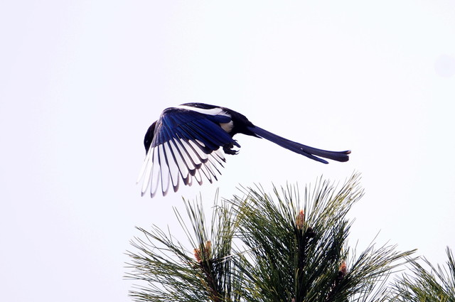 【愛鳥週間】県鳥の画像を貼ってくの画像109枚目!